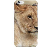Lioness - Masai Mara - Kenya iPhone Case/Skin