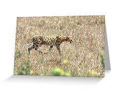 Serval Cat - Kenya Greeting Card