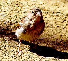 Sparrow by Lee Kerr