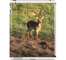 Masai Mara Dikdik Deer iPad Case/Skin