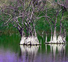 Green Mangroves  119 Views by Rosalie Scanlon