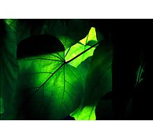 Cool Shade Photographic Print
