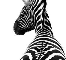 Zebra by Karissa Schulten
