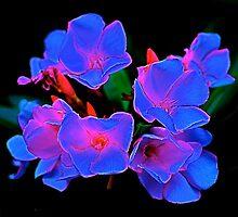Midnight Bouquet by Julie Marks