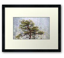 8.1.2015: Pine Tree, Snowfall II Framed Print
