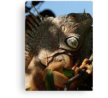 portrait of an iguana IV - retrato de iguana Canvas Print