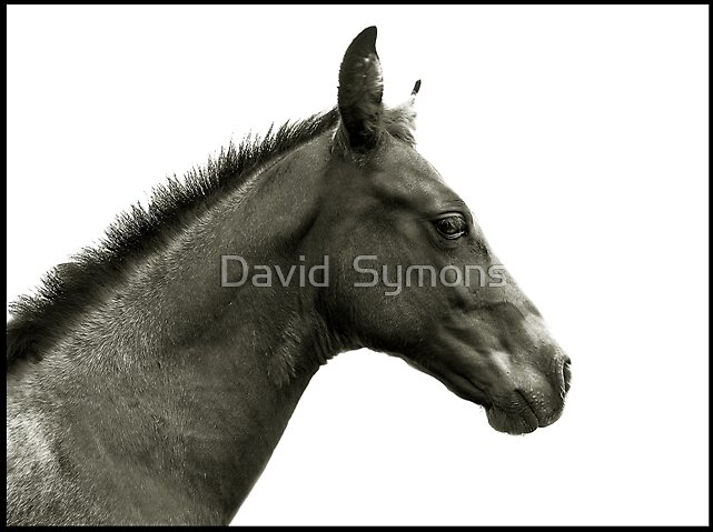 A Horse is a Horse by David  Symons