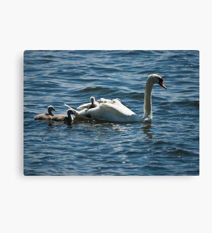 Swan Chariot Canvas Print