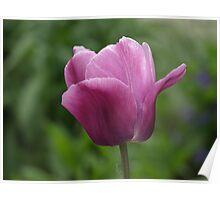 NC a single flower Poster