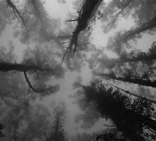heads in the clouds by joe gooding