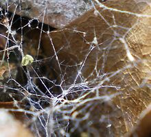 Spider Web by Rebekah  McLeod