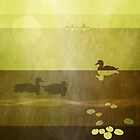 Duck: Floating: Warm Gold by Steven House