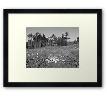 And then there were none ... Framed Print