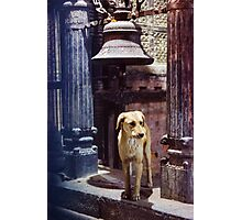 Pavlov Photographic Print