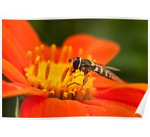 Native Pollinator Poster