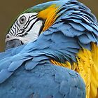 parrot oh parrot by lookslikerain