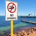 Shark Bay by Rochelle Boardman