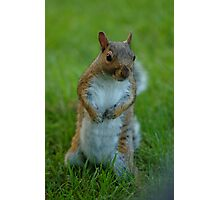Squirrel Standing His Ground ! Photographic Print