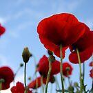 The Poppy Club by Nicholas Averre