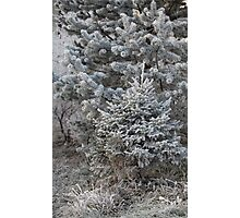 forest trees in hoarfrost Photographic Print