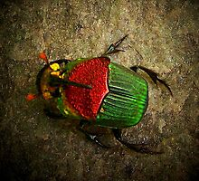 Scarab on Stone by suzannem73
