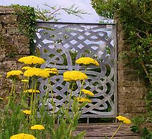 Yellow Tansy and a Gate by lezvee