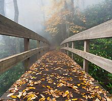 Blue Ridge Mountain Autumn Foggy Hiking Trail Bridge by MarkVanDyke