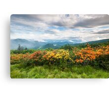 Roan Highlands Flame Azalea Appalachian Trail Canvas Print