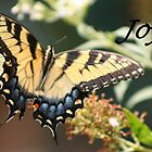 Joy... by lyndamarie