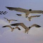 Free... by lyndamarie