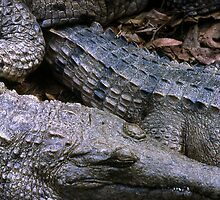 crocs! by Roz McQuillan