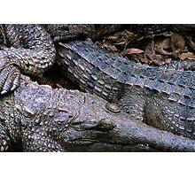 crocs! Photographic Print