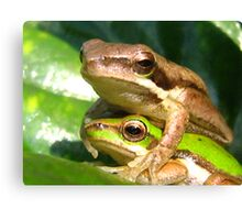froggy love Canvas Print