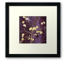Yellow catkins Framed Print