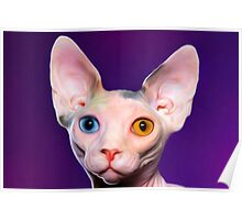 Sphynx Cat Oil Painting Mr Two Tone Poster