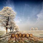 Frosty Morning by MattD