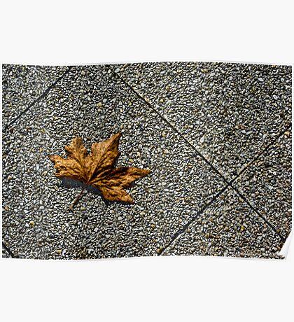 Fallen Leaf on Chapel St Poster