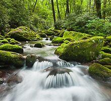 Great Smoky Mountains Roaring Fork Green Cascade by MarkVanDyke
