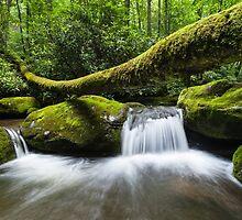 Great Smoky Mountain Roaring Fork Fallen Log Cascade by MarkVanDyke