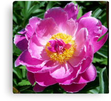Magnificent Peony Canvas Print