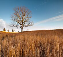 Virginia Native Grassland Landscape Winter by MarkVanDyke