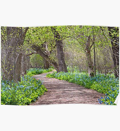 Potomac Heritage National Scenic Trail Virginia Bluebells Poster