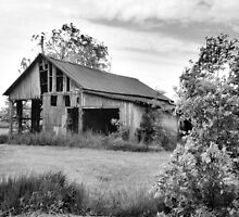 Old Barns Series #1 by Gaby Swanson  Photography