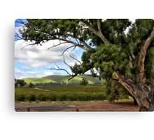 Jacobs Winery, South Australia Canvas Print