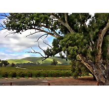 Jacobs Winery, South Australia Photographic Print