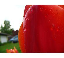 Red Freshness Photographic Print
