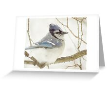 Snowy Blue Jay Greeting Card