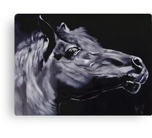 Fury - Beautiful Horse Head Canvas Print