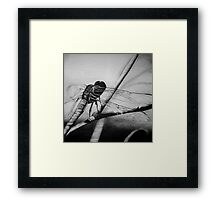 The Dragonfly Framed Print