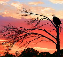 BALD EAGLE SUNSET by TomBaumker